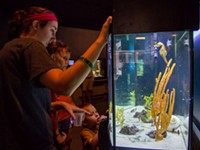 The joy of discovery at the UGA Aquarium