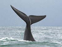Editor's Note: Saving the whales = bridging partisan divide?