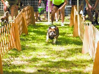 Humane Society's annual carnival brings out the party animal in all of us