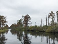 The slow clock of the Okefenokee Swamp