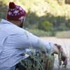 Healing PTSD through nature