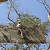 Summer Living: Aerial Adventure on Hilton Head