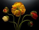 5c464cd2_florals-04-2.jpg