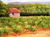 st._vitiore_vineyard_hospice_savannah.jpg