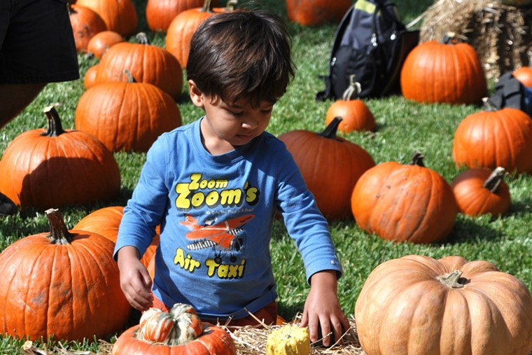 It's pumpkin patch season and Autumn at the Arboretum features over 90,000 pumpkins, gourds and squash. - STACEY MECCA