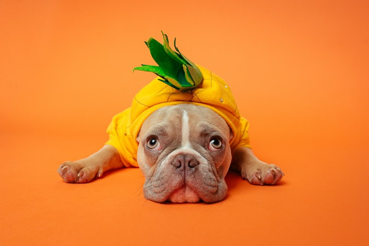 """Dress up your dog in its cutest or creepiest costume and take Fido down to a special """"Halloween pawty"""" at the Shops at Park Lane Dog Park. - KARSTEN WINEGEART/UNSLPLASH"""