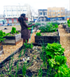 West Oakland Activists Vow to Defend Afrika Town Community Garden