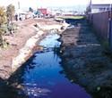 The Richmond Bioswale Project