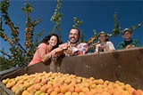 CHRIS DUFFEY - Apricot grower Tony Gliedt and family.