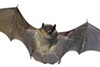 Bats are under siege nationwide.