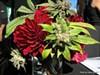 BPG Takes Top Honors at SF Cannabis Cup