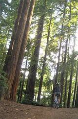 JUSTIN PAGE - Big Trees Trail