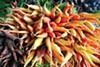 Carrots from Rio de Parras Organics at Swan's Market.