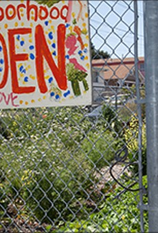 Confusion Reigns Over Oakland Urban Gardens