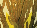"""Detail of Amy Nathan's """"Cactus as Tree."""""""