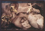 "Detail of Jeanne O'Connor's ""Dodo Bird."""