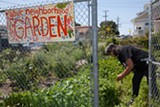 LORI EANES - Diane Williams works in the urban garden that she and her neighbors created in their Fruitvale neighborhood.