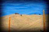 """TERESA RENEE NORRIS - """"Dust Storm"""""""