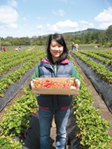 LUKE TSAI - Emily Lee shows off her hand-picked strawberries.