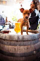 STEPHEN LOEWINSOHN - Even dogs like the beer at Beer Rev.