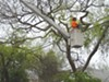 Even when Oakland's crews were fully staffed, managing the city's trees was no easy task.