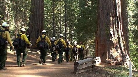 Fire crews start protecting Tuolumne Grove in Yosemite.