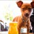 Five Dog-Friendly Bars and Restaurants in the East Bay