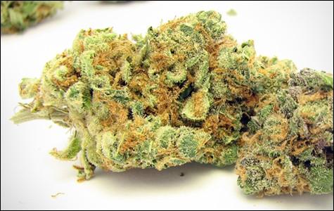 mg_legalize_3451.jpg
