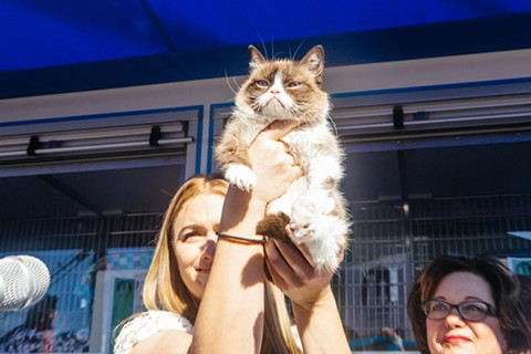 Grumpy Cat! - KIRA STACKHOUSE