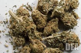 marijuanadea.jpg