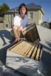 Leah Fortin's rooftop hive.