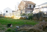 PHOTOS VIA @CATMANOFWESTOAKLAND - Left unchecked, feral cat populations can increase rapidly.