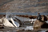 Leviathan provides a bleak look at how life is lived in the former USSR.