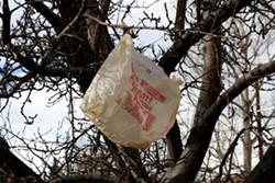 plastic-bag-in-tree.jpg
