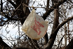 plastic-bag-in-tree.jpg