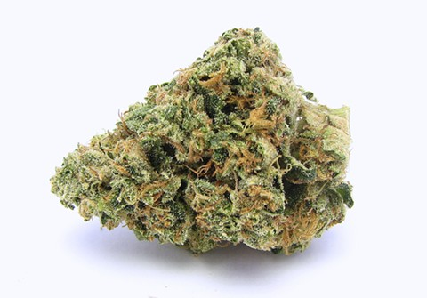 Kosher Kush (shown above) could soon be growing on tribal lands in Northern California. - DAVID DOWNS