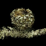 SHARON BEALS - Nest Series