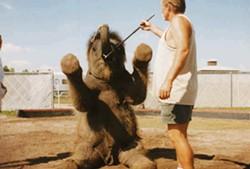 elephant_bullhook.jpg