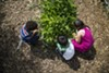Proponents say the soda tax proceeds would help restore funding to school garden programs.