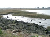 NATE SELTENRICH - Richmond's Breuner Marsh is to be restored in five years.