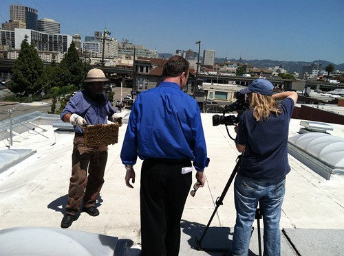 Rooftop beehive shoot (via Blue Bottles Facebook page)