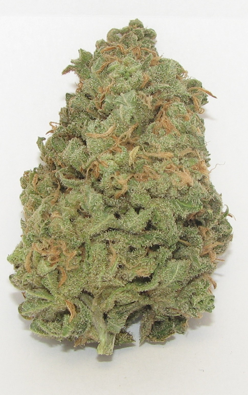 SF dispensaries did an estimated $41 million in annual sales of medical cannabis, like this Blue Dream from Shambhala