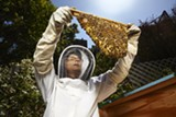 BRAD WENNER - Susan Kegley of the Pesticide Research Institute said that, in areas where corn and soy is being planted, honey production has declined between 30 and 80 percent.