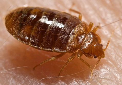 Tenants said their apartment building at 715 Peralta Avenue is infested with bedbugs.