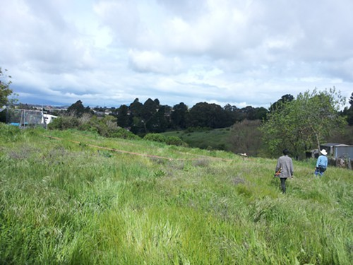The future site of Wild and Radishs urban farm and ecovillage (via Wild Radish).