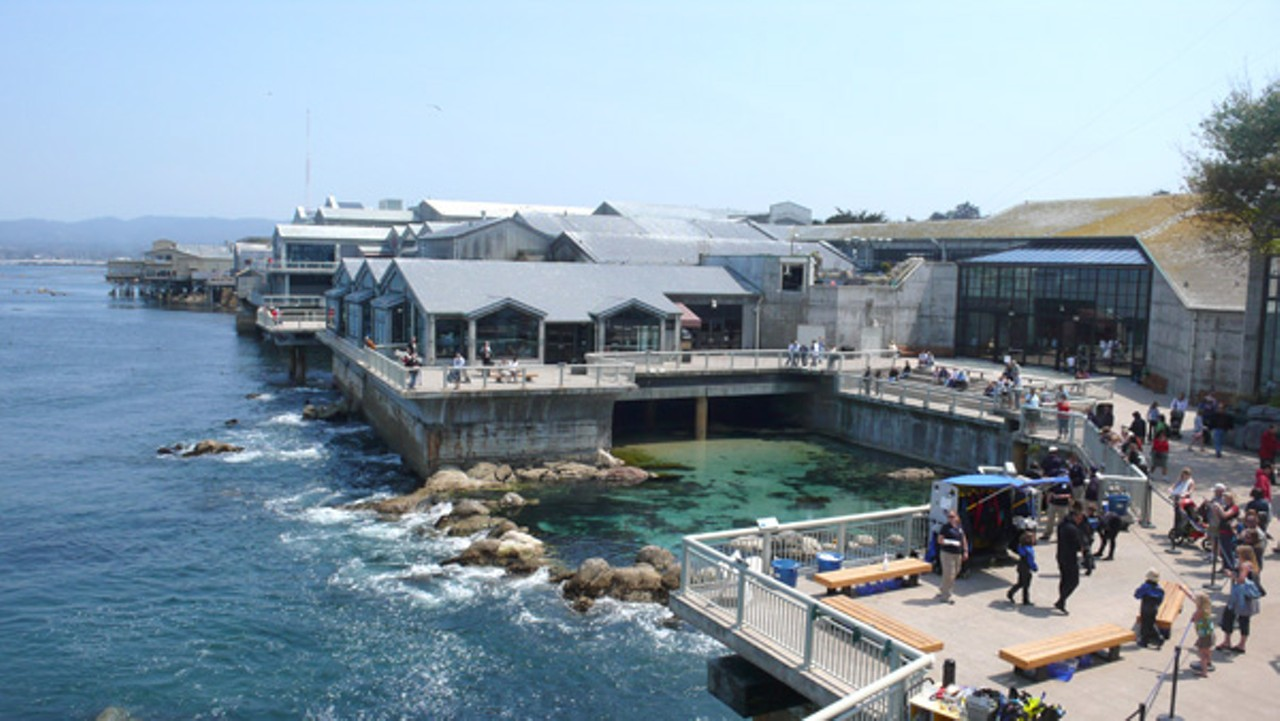 Monterey Bay Aquarium Can Dump Wastewater East Bay Express
