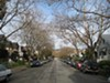 Trees are the hallmark of a sustainable city, but Oakland's program is fraught with challenges.