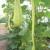 The Secrets of Vertical Gardening