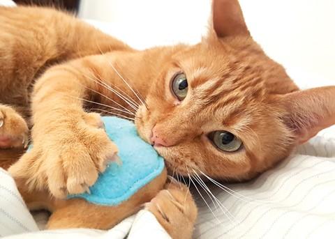 East Bay kitties deserve organic catnip. - PHOTO COURTESY OF MISO HANDMADE