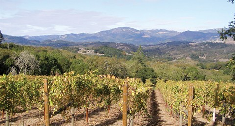 Take your dollars to wine country. - PHOTO BY ANLACE/WIKIMEDIA COMMONS (CC)